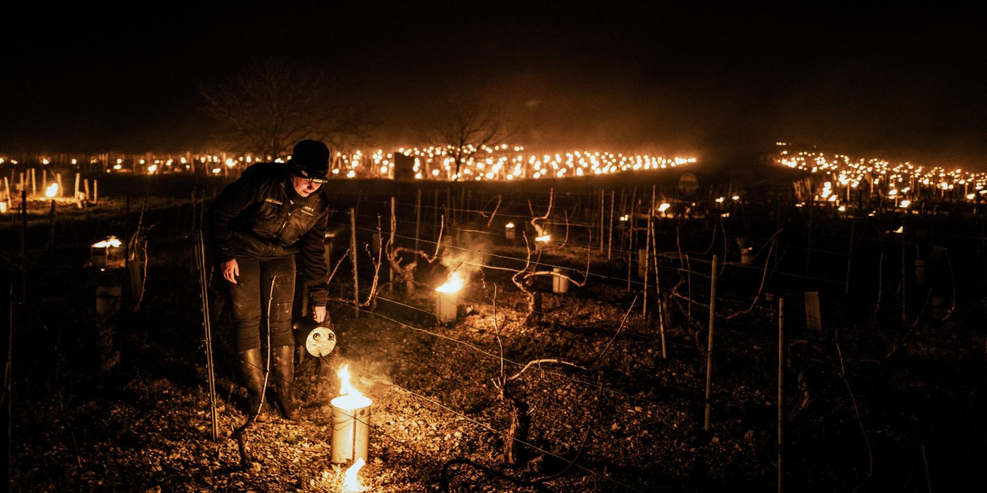 罗纳河谷(RhôneValley):与葡萄树上的霜冻作斗争导致了污染的面纱